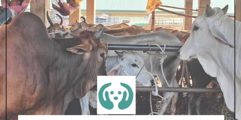 Animall raises funds